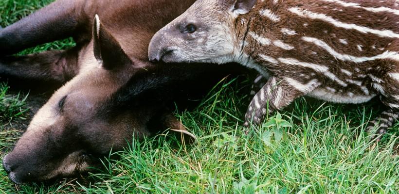 Brasil lança projeto para proteger espécies ameaçadas de extinção