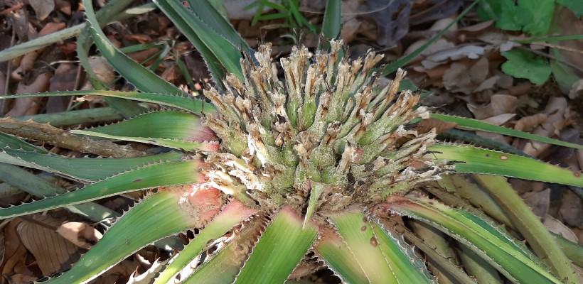 Expedição de campo Pró-Espécies PAT Cerrado Tocantins busca 4 espécies da flora ameaçadas de extinção