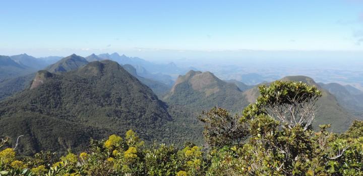 Reavaliações de risco de extinção da flora: atualização da lista de espécies no Projeto Pró-Espécies