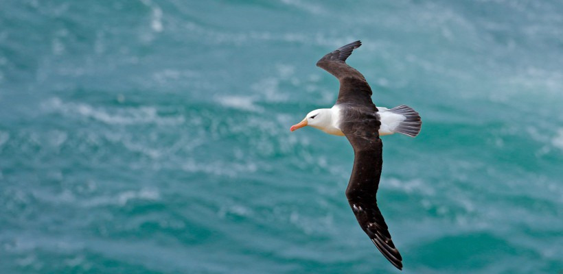 Pró-Espécies seleciona consultoria para avaliar interação de aves marinhas ameaçadas com pescaria de vara e isca viva – Encerrada