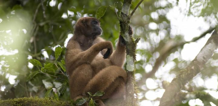 Inovação em PANs Territoriais para a conservação de espécies ameaçadas