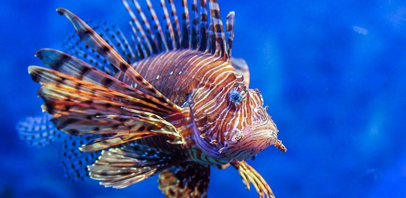 Pró-Espécies realiza oficina de protocolos de risco de invasão para espécies aquáticas