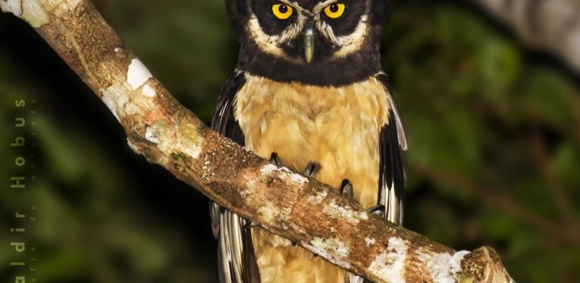 PAT Planalto Sul celebra o Dia Mundial do Meio Ambiente discutindo ações de conservação