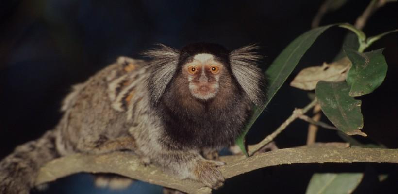Pró-Espécies seleciona consultoria para programa nacional de espécies exóticas invasoras – Encerrada