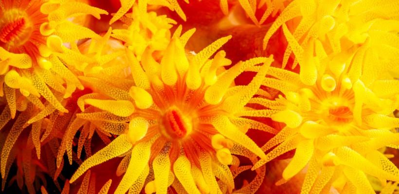 Pró-Espécies seleciona consultoria para listas de espécies exóticas invasoras – Encerrada