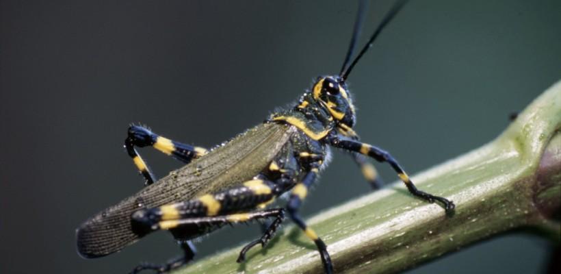 Pró-Espécies seleciona consultoria para elaboração e revisão de listas de espécies da fauna no estado de São Paulo – Encerrada