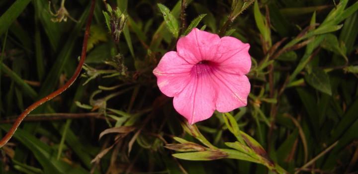 Mata Atlântica recebe plano de ação territorial para flora e fauna ameaçadas em SC e RS