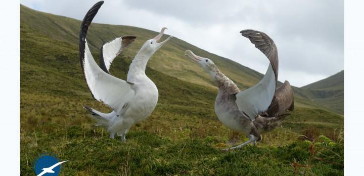 Dia Mundial do Albatroz deste ano demonstra que é possível compatibilizar a atividade de pesca e a conservação das aves