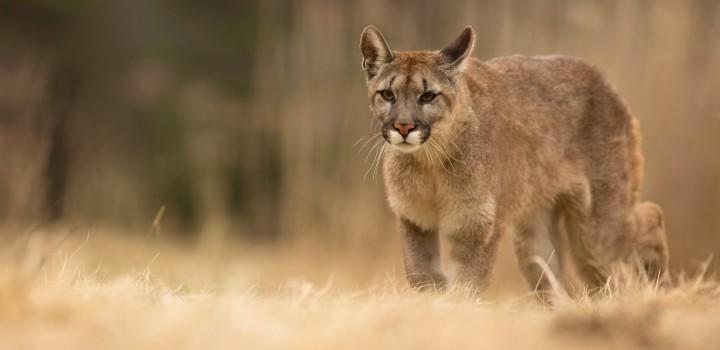 Comissão Nacional de Biodiversidade apresenta propostas de novas listas de Espécies da Flora e da Fauna Ameaçadas de Extinção