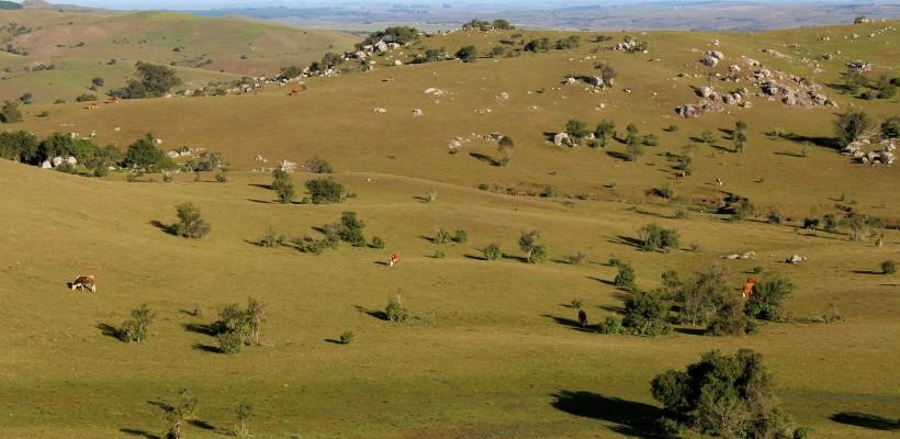 Pampa ganha plano de ação territorial para flora e fauna ameaçadas de extinção