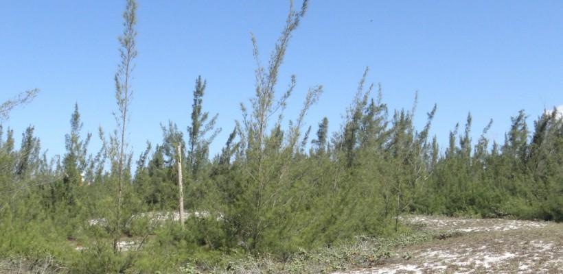 Pró-Espécies seleciona consultoria para manejo de Espécies Exóticas Invasoras e Plantio de Espécies Alternativas em UCs no RJ – Aberta